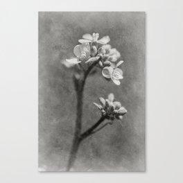 Timeless flowers #7 Canvas Print