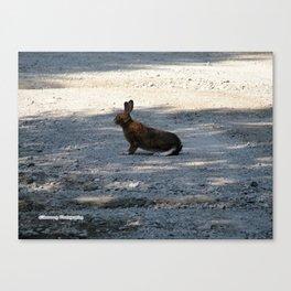 Snowshoe Hare. Canvas Print