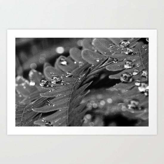 droplets on a fern Art Print