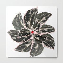 Mandala Ficus Metal Print