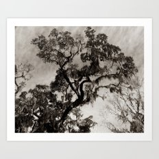 Wise Old Tree 2 Art Print