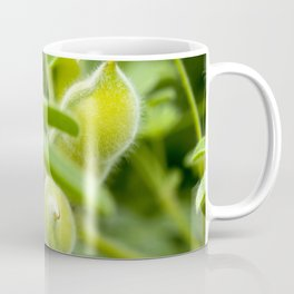 Soy Seeds - Original Botanical Nature Photography - Flora Art Coffee Mug