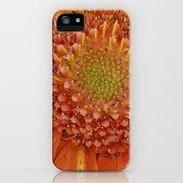 Orange center Gerbera daisy iPhone Case
