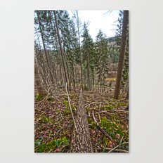 if a tree falls in the woods Canvas Print