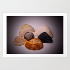 Different color shell Art Print