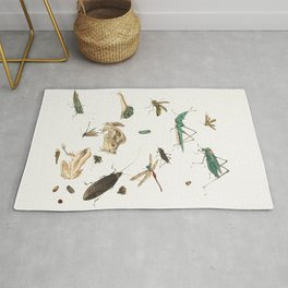 Insects, frogs and a snail Rug