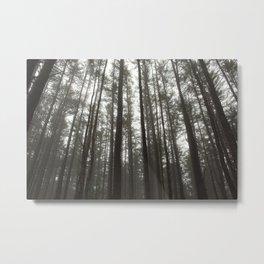 Northeastern Forest Metal Print