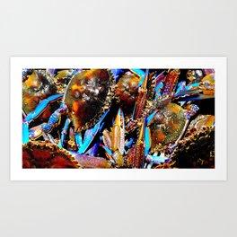 bright Blue swimmer crabs, Whyalla, South Australia Art Print