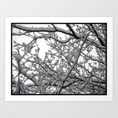 Snow Covered Branches Art Print
