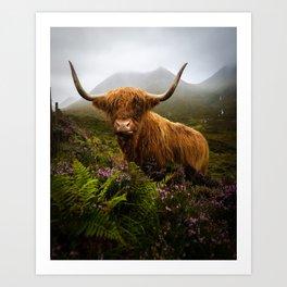 Scottish Highlands Cow Art Print