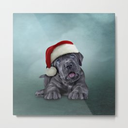Puppy Cane Corso - Italian Mastiff in red hat of Santa Claus Metal Print