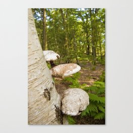 Forest wild mushrooms Canvas Print