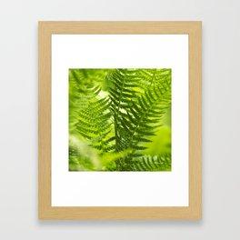Green Fern Abstract Framed Art Print