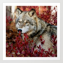 Wolf in red foliage Art Print