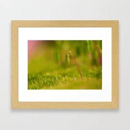 Moss germ, Alone in a green Land Framed Art Print
