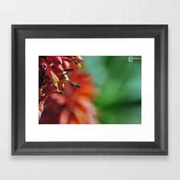 Bee and Flower Framed Art Print