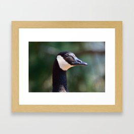 Canada Goose close-up Framed Art Print