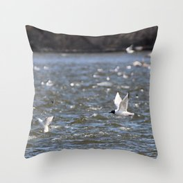 Bonaparte Gull Five Throw Pillow