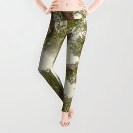 Into the Mist - Nature Photography Leggings