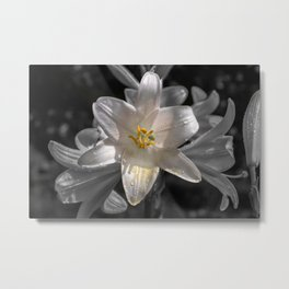 Colourful lily on monochromatic background Metal Print