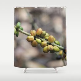 Illustration Coffee Beans Shower Curtain