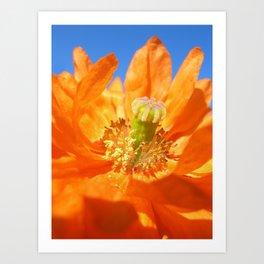 poppy bloom  I Art Print