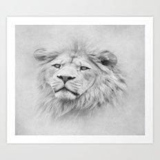 Barbary Lion  Art Print