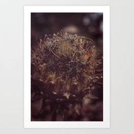 Dead Flower Art Print