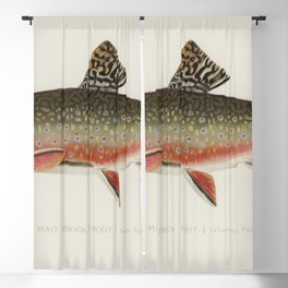 Male brook trout (Salvelinus Fontinalis) illustrated by Sherman F Denton (1856-1937) from Game Birds Blackout Curtain