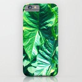 Three-Foot Massive Taro Leaves in Papua New Guinea iPhone Case