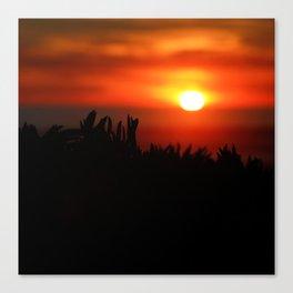 Sunset through succulents Canvas Print