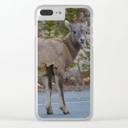 Big horn sheep stops to pose in Jasper National Park Clear iPhone Case