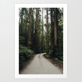 The Redwoods of California Art Print