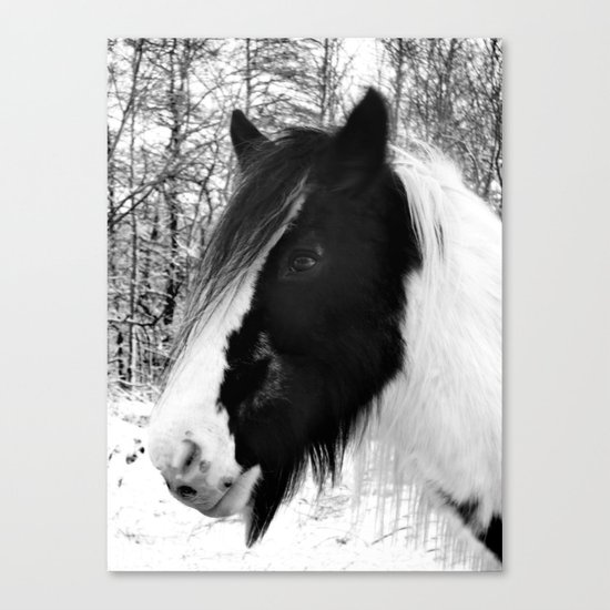Horse. Black+White.Snow. Canvas Print