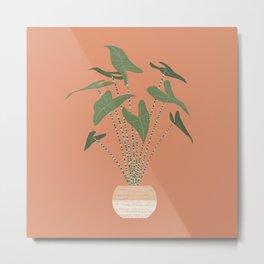 Alocasia zebrina in a basket planter Metal Print