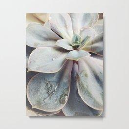 beauty of succulent Metal Print