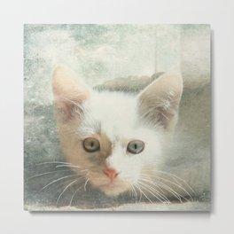 Flamepoint Siamese Kitten Metal Print
