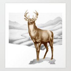 White-tailed Stag 2 Art Print