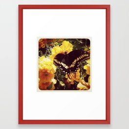 Butterfly with orange flowers Framed Art Print