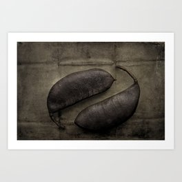 Kentucky Coffee Bean Seeds Art Print