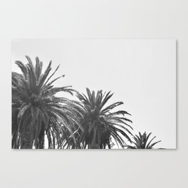 Black and White Palm Trees 02 Canvas Print