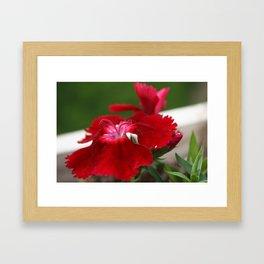 Tiny Ant Framed Art Print