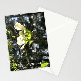 White Dogwood Stationery Cards