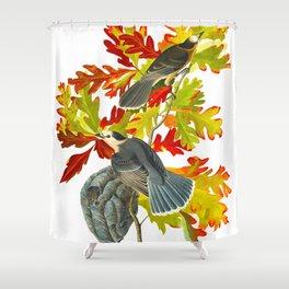 Vintage Canada Jay Illustration Shower Curtain