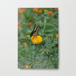 Marigold and Butterfly Metal Print