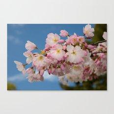 Cherry Blossoms (Edit 2) Canvas Print