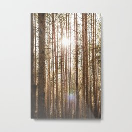 Perfect Lines in Nature. || Sunshine in the Forest. || Jurmala, Latvia. || Metal Print