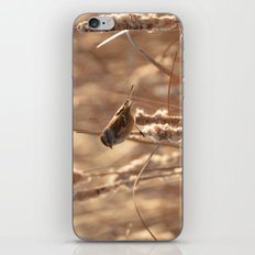 A Sparrow on Catails iPhone & iPod Skin