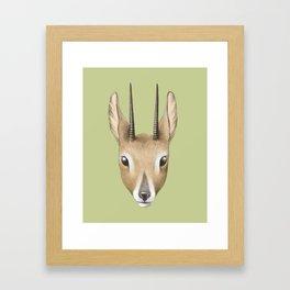 Antelope (colour) Framed Art Print