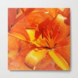 Morning Dew on Orange Lilies Metal Print
